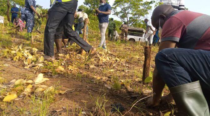 Journée nationale de l'arbre : l'entretien des plants une étape nécessaire à sa survie